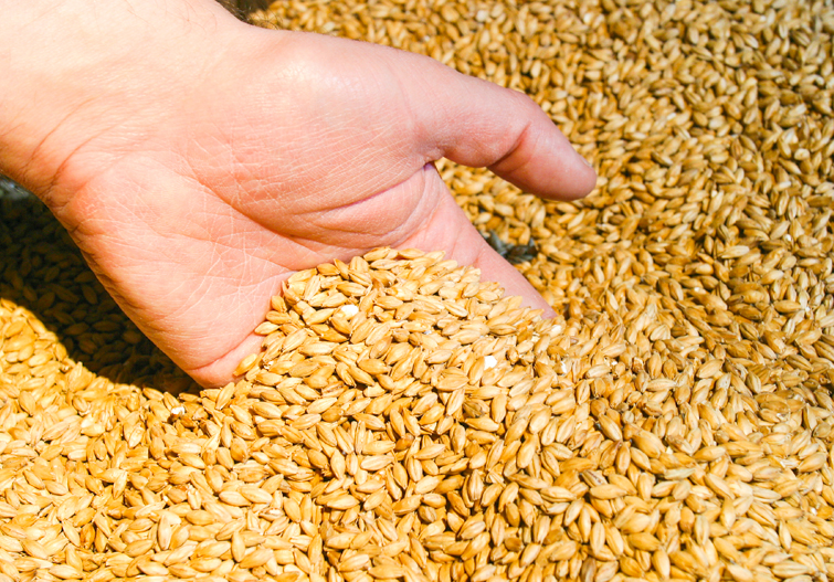Malt – An old familiar friend we really don't know very well