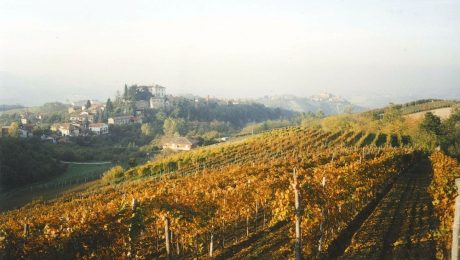 About vineyards and wineries