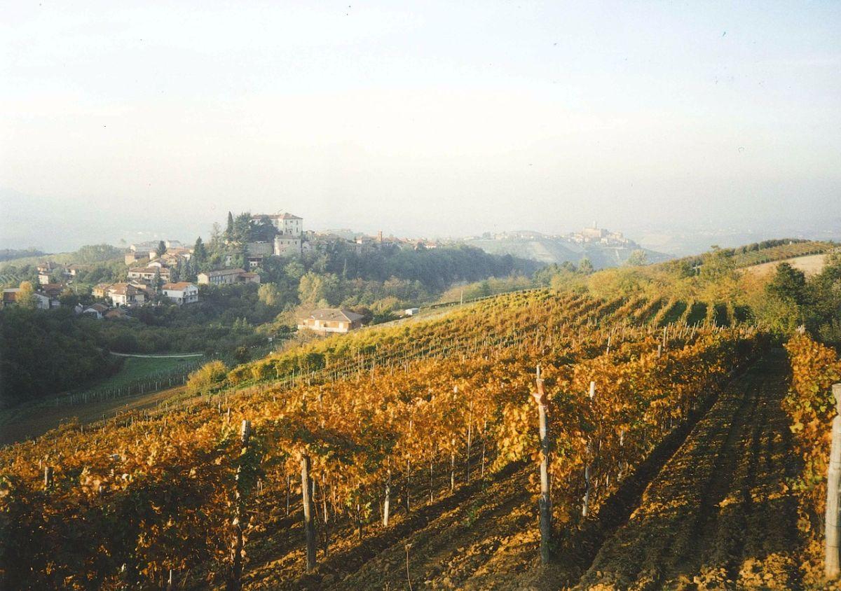 Über Weinberge und Weingüter